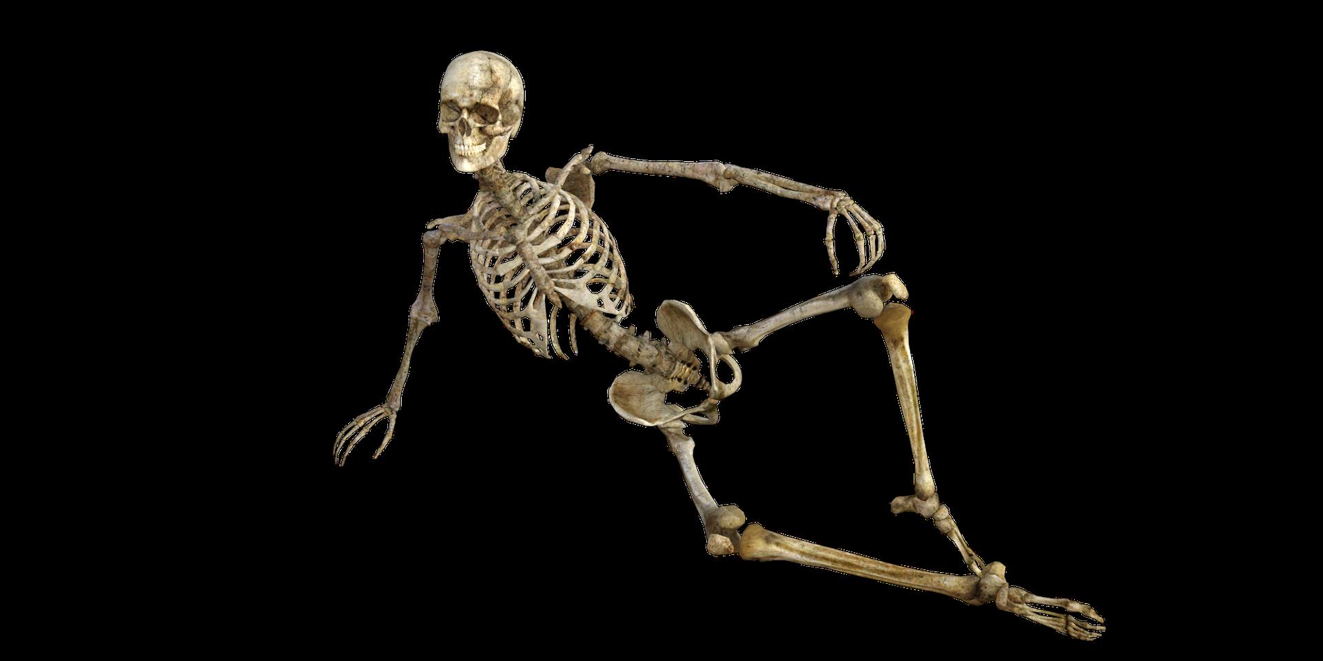 Le bouleau pubescent prend soin de votre squelette