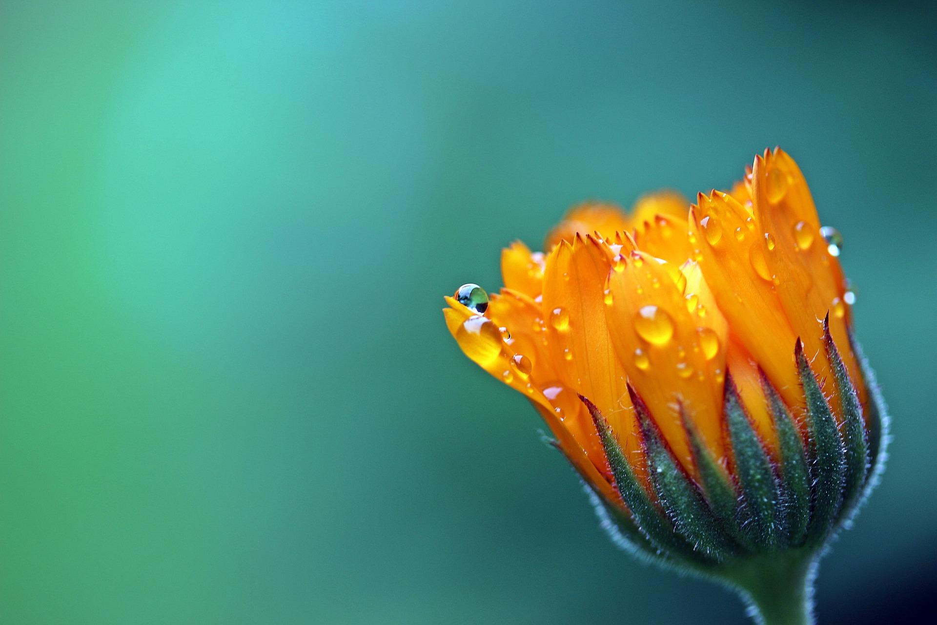 Même la couleur d'une plante peut apporter un message à notre corps