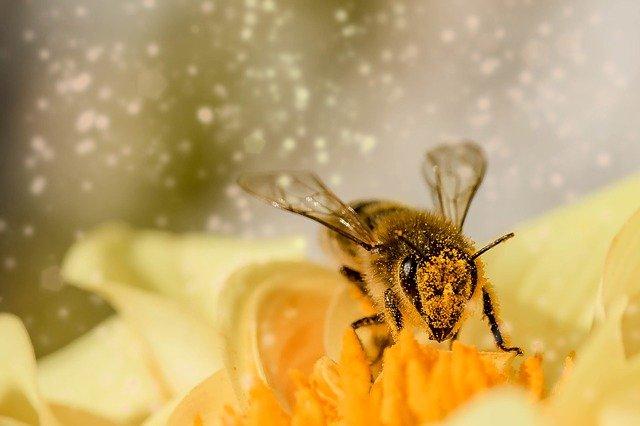 Que deviendrions-nous sans les abeilles ?