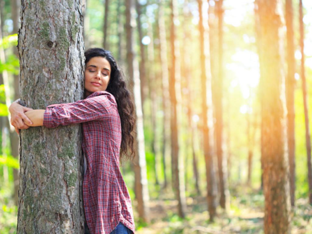 Laissez l'arbre vous apprendre à vous enraciner