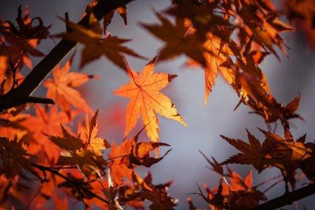 L'automne, saison énergétique du Gros Intestin et des Poumons