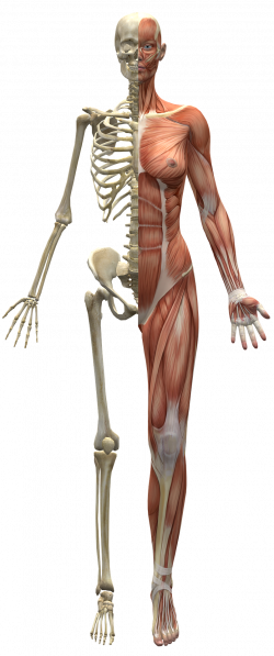 Votre squelette a besoin de calcium