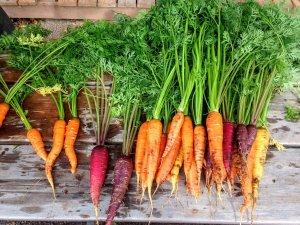 Seuls les légumes et fruits fraichement ramassés ou cueillis vous apportent des nutriments en quantité suffisante