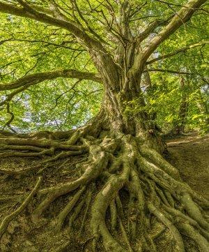 Les racines sont à l'arbre ce que sont les intestins pour l'être humain