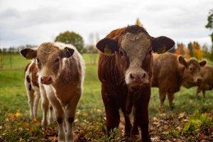 Notre relation aux animaux devient de plus en plus consciente