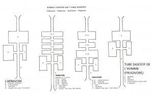 les 4 tubes digestifs selon Marchesseau