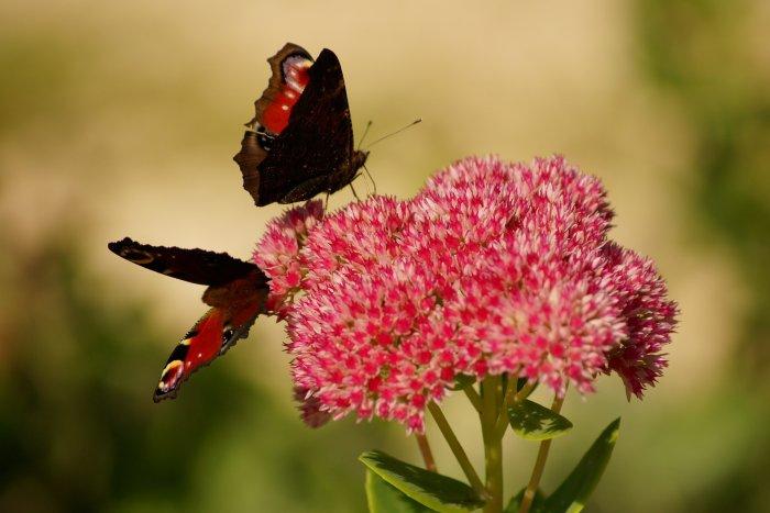 La vie peut être une suite de transformations, de compréhensions, jusqu'à atteindre votre source intérieure