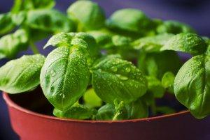 Les aliments sont dits vivants quand ils regorgent d'enzymes