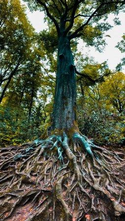 Il est toujours temps de créer vos propres racines