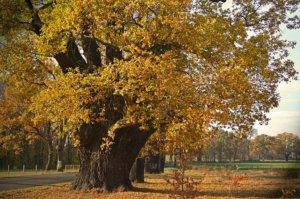Le chêne nous aide à trouver la sécurité intérieure