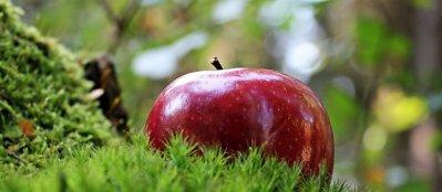 La cure de pommes est une bonne alternative à celle de raisins.